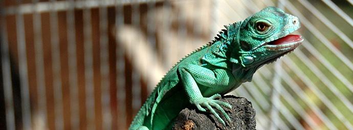 adott.iguana web