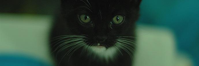 gattile web