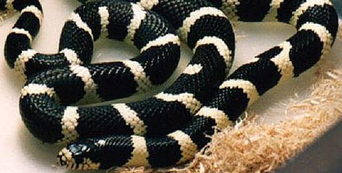 Vimercate: un serpente a spasso al centro commerciale.