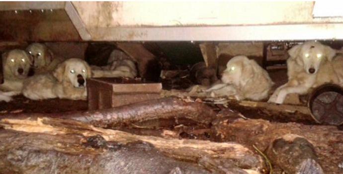 Il campo degli orrori: decine di animali tenuti in condizioni orrende.