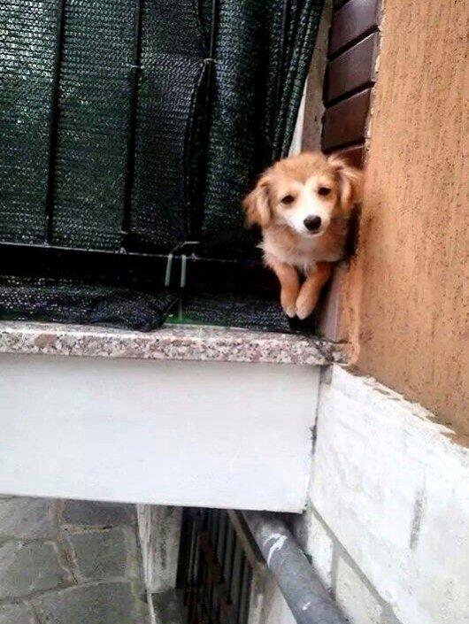 NS cane Guia sul balcone