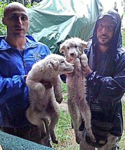 NS cuccioli con volontari