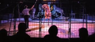 eviden-circo-tigri