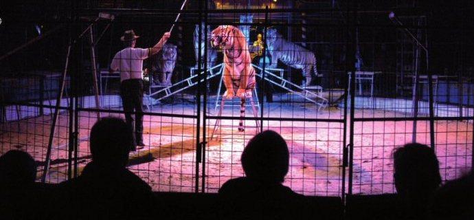 Circo Millenium a Monza: presidio degli animalisti