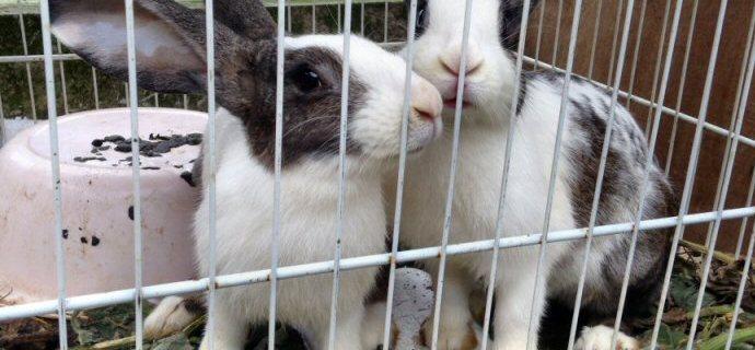 Due conigli tornano alla vita.