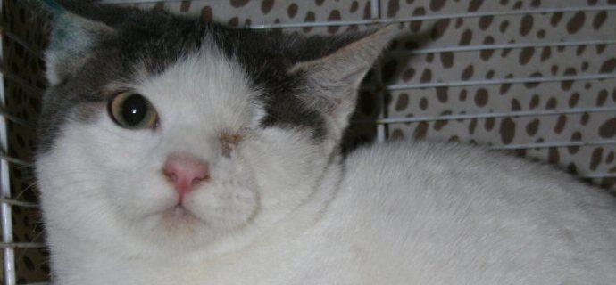 Torna libero (senza un occhio) il gattino colpito da proiettile