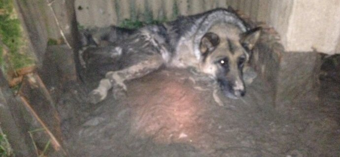Cane paralizzato immerso nel fango