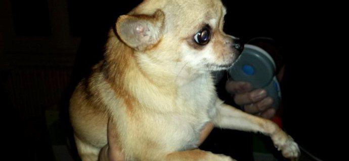 Scoperto traffico di cuccioli