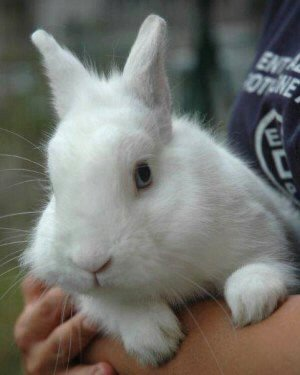 Cavie e conigli scatta l emergenza enpa monza - Lettiera coniglio nano ...