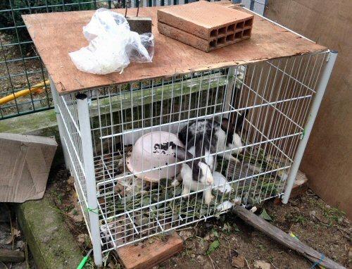 conigli gabbia-2452A-cs