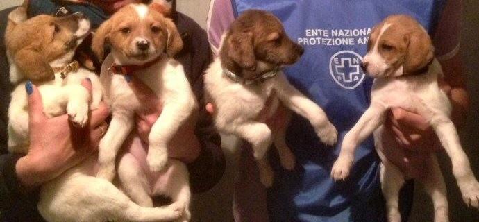 evidenza-cuccioli con 2 volontari