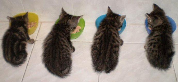 Appello cibo per gatti!