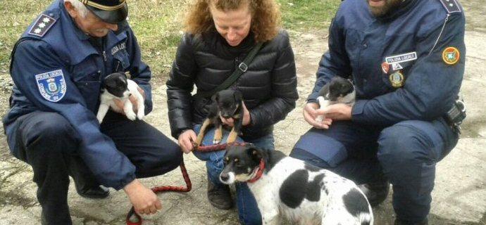 """Traffico di cuccioli a Monza, coinvolto il """"solito"""" pastore"""