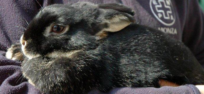Emergenza cavie e conigli: siamo pieni!
