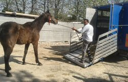 cavalli-desio-5