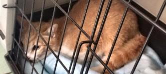 EVIDENZA-gattino rosso-865167_n