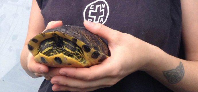 Una tartaruga per amica!