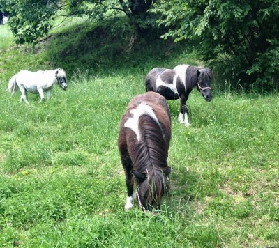 NS-pony nuova casa_4427
