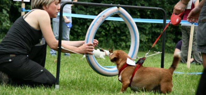 Mobilitiamoci! La Mobility Dog regina a Lissone.
