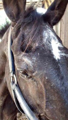 cavallo testa-NS_6717