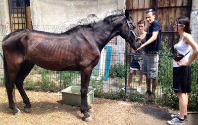 cavallo volontari Enpa-NS-548A7C1