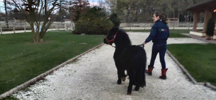 Un bel lieto fine per il pony Golia!