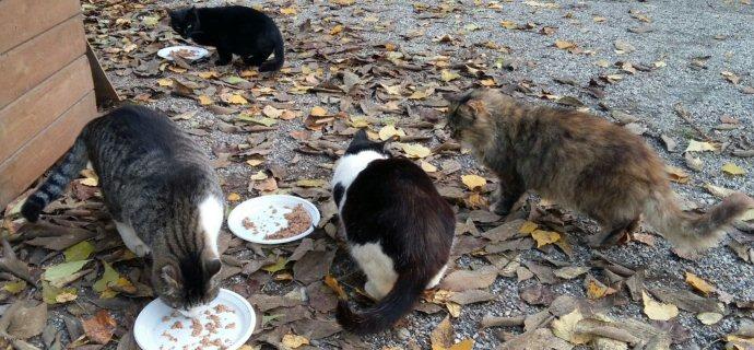 AAA alimenti: appello per i gatti di colonia!