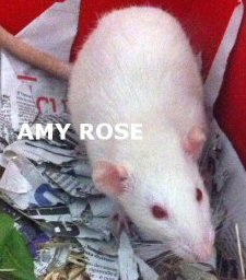 NS_amy rose