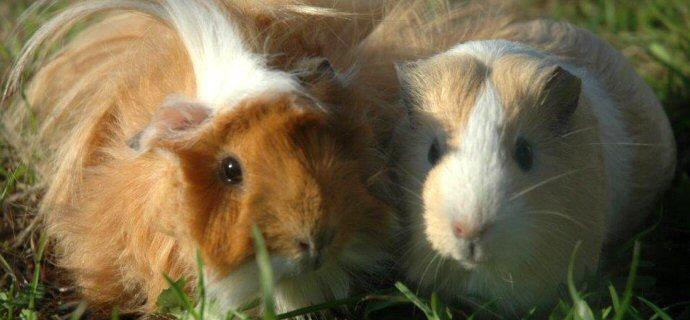 Conigli e roditori: siamo al collasso!