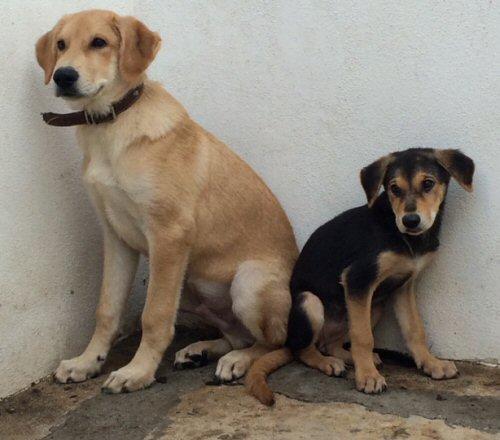 nS-cuccioli in arrivo da Lipari-0000