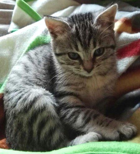 gattina Ciupita-NS-0001