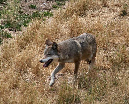 cerco un partner per il mio cane shitzu uomo cerca uomo brianza