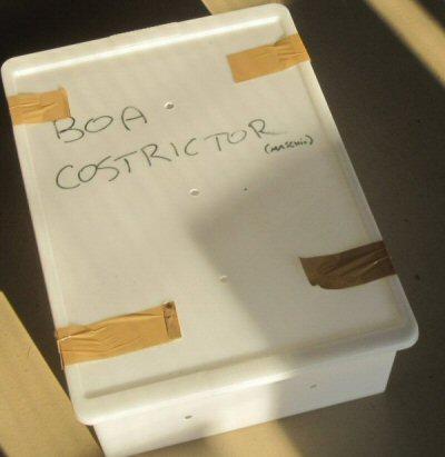 contenitore-boa-NS