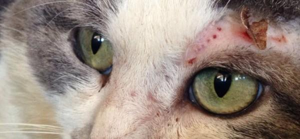 Arriva la primavera, in pericolo i gatti non sterilizzati