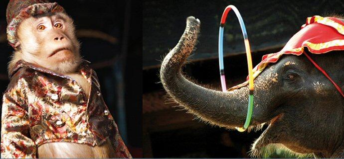 Sabato 7 maggio  banco contro il circo con gli animali e6287c7d559c