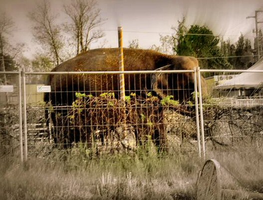 elefante-ns-0442_n