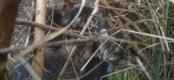 Muggiò, 5 gattini di 10 giorni salvati da una cagnolona.