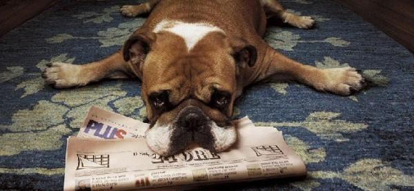 Anche gli animali vogliono leggere!