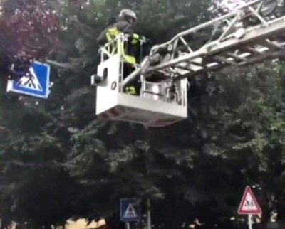 NS-gatto-albero-Monza Today-2