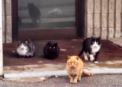 NS_ultimi 4 gatti colonia_0007