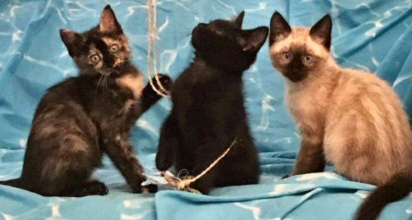 Emergenza gattini: ospitalità, pappe e adozioni