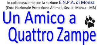 EVIDENZA - UN AMICO A 4 ZAMPE