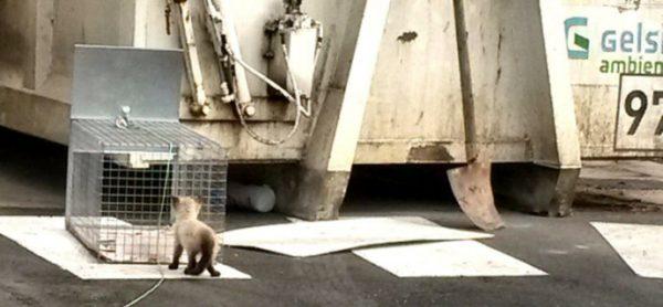 Gattino salvato nella piattaforma ecologica
