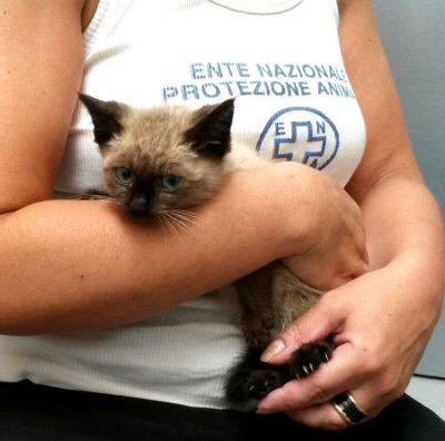 NS_gattino in braccio a roberta_104825