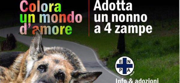 """Premiato il progetto """"Adotta un nonno"""" dell'ENPA di Perugia"""