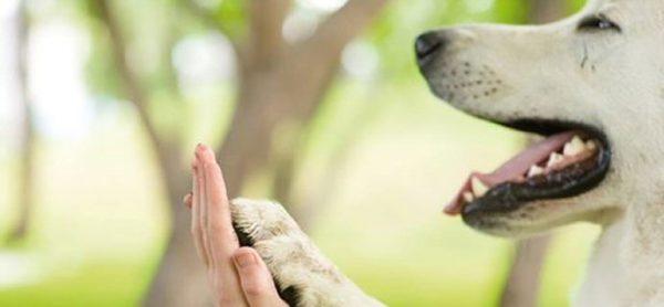 Serata: Il cane in famiglia