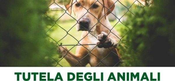 Serata sulla tutela degli animali, giovedì 20 ottobre a Merate