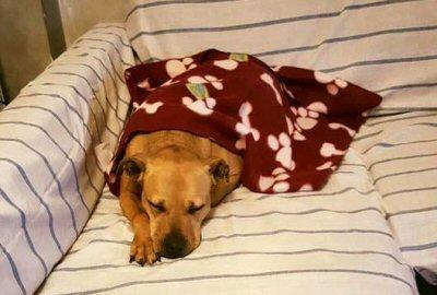 Sii felice shara enpa monza - Dormire sul divano ...