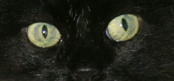 Arriva Halloween, attenti ai gatti neri!