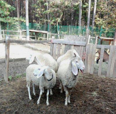 pecore-ns-wa0026